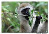 Monkey_DD30541