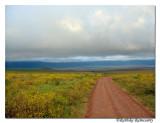 Way to crater(Ngorongoro)