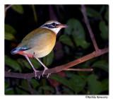 Salim Ali Bird Sanctuary ,Thattakad - Kerala