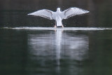 bird_photography