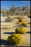 joshua_tree_national_park