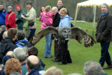 Falconry at Bodnant Garden North Wales