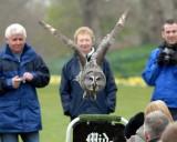 Falconry at Bodnant Garden