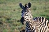 Madikwe, Welgevonden - South Africa