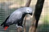 zoo_photos