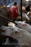 2 Lechon Baboy/Roast Pig