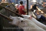 3 Lechon Baboy/Roast Pig