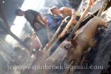 5 Lechon Baboy/Roast Pig