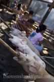 19 Lechon Baboy/Roast Pig