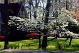 Spring in the Neighborhood