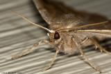 Moth_2009May05_019_Tag.jpg
