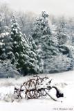 Winter_Scene_Auburn_Horse_2010feb28_162_Tag.jpg
