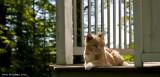 Retired Kitty