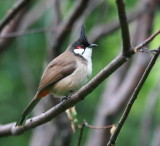 Birds in China