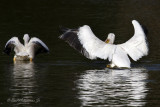 That's Right Spread Your Wings Like This