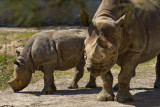 Rhino  Mom  & Baby