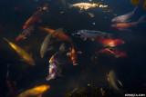 DSC01366-fish.jpg