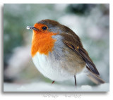 Robin-in-snow-2.jpg