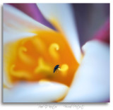 Flower-Insect.jpg