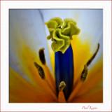 Tulip-2.jpg