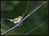 birds of roscoe.jpg