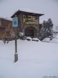 Olive Winter Garden