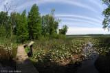 Pax River Marsh