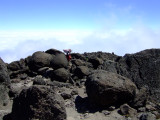 Dodging Boulders Above the Clouds