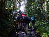 Slogging Through the Rain Forest