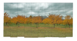 Apple orchard squares