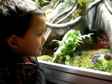 Viewing one of the frog exhibits at AMNH
