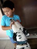 Still timid around dogs