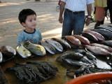 Perusing the evening fish market