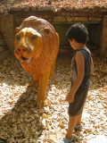 ... lion (two lions pictured)