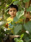 Tree climber I.