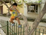 Tree climber II.