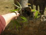 Elephant chow