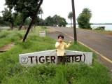 Tiger Enclosure, Bhopal Zoo
