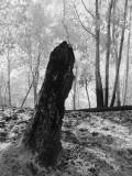Stump (infrared)