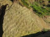 Camstayne sedimentary rock