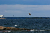 White tailed eagle and Nuclear Power Plant