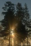 Sun Burst1_DSC8770.jpg