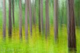 Pine Forest Multiple_NIK9144.jpg