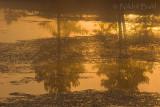 Sunrise Reflection_NIK9351.jpg