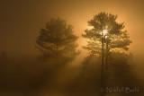 Foggy Sunrise1_NIK9358.jpg