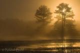 Foggy Sunrise2_NIK9361.jpg