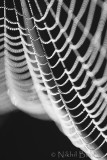 Spider Web2_NIK9413.jpg