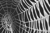 Spider Web1_NIK9410.jpg
