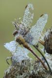 Dewy Dragonfly_NIK9561.jpg