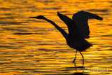 Sunset Dance_NIK5638.jpg